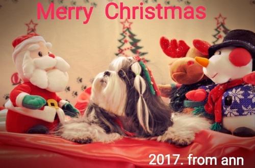 2017-12-17_14.53.34.jpg